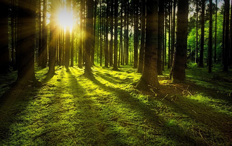 Wald zu verkaufen